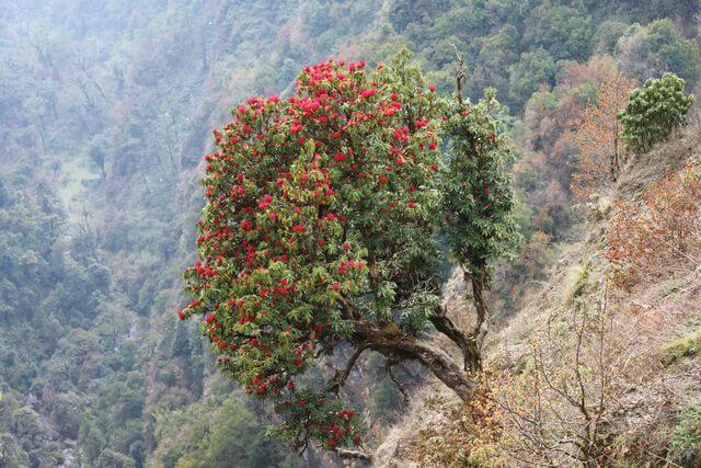Rhododendron vart man än vände sig