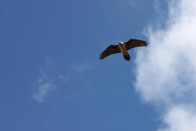 Golden Eagle nagra meter over vara huvuden!