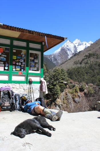 Pete och en trekking dog sover skont i solen