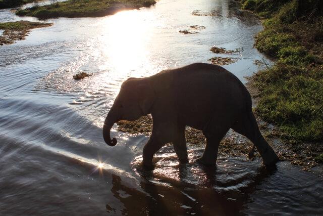 Elefant babyn fick följa med på safarin!